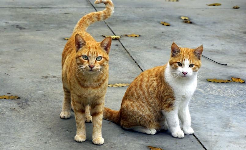 Akcija sterilizacije i kastracije mačaka
