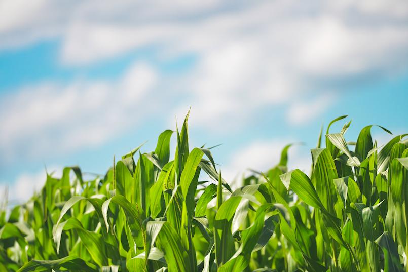 Program potpora poljoprivredi na području Općine Pićan za 2018. godinu