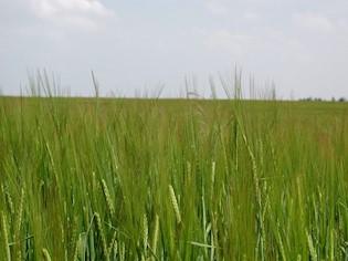 Obavijest o javnom uvidu u prijedlog Programa raspolaganja poljoprivrednim zemljištem u vlasništvu RH na području Općine Pićan