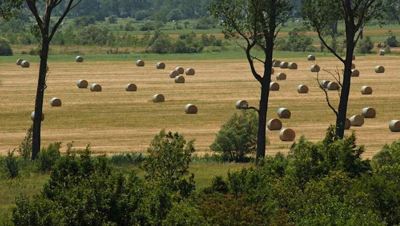Općina Kršan donijela Program raspolaganja poljoprivrednim zemljištem u državnom vlasništvu, kojim nije zadovoljan vlasnik Bio Adrie Vladimir Licul