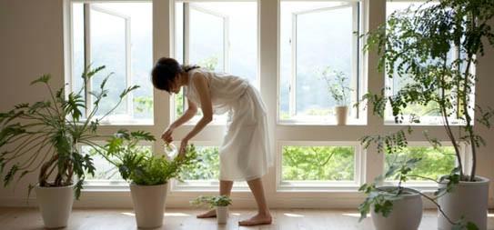 Koje su to biljke čuvarice zdravlja u kući?