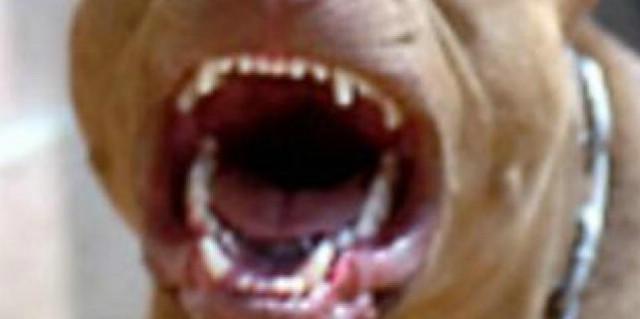 Zajci: Kaznena prijava vlasniku psa koji je napao majku i dijete