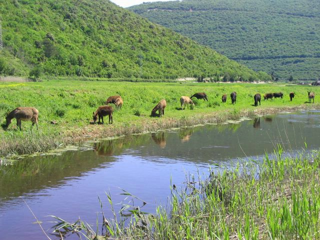 """Rezervat magaraca """"Liburna"""" slavi 15 godina postojanja"""