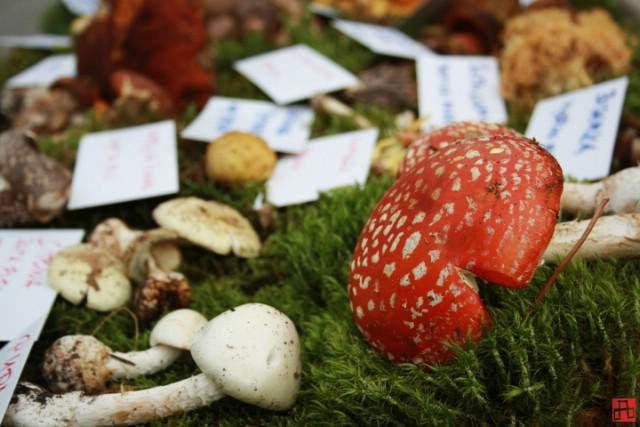 Godišnja izložba gljiva na Katurama