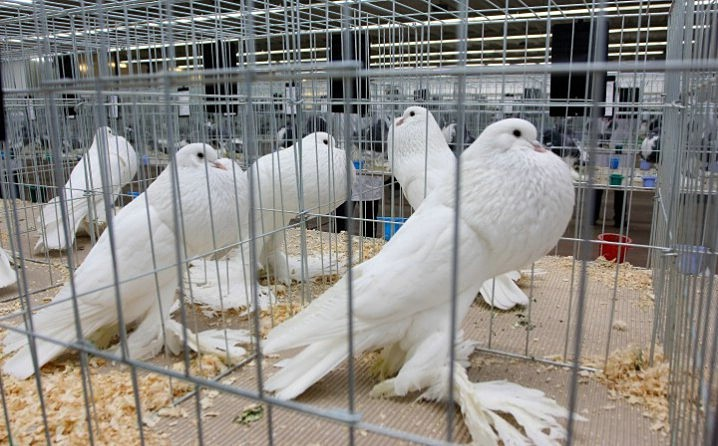 Trodnevna međužupanijska izložba ptica i malih životinja