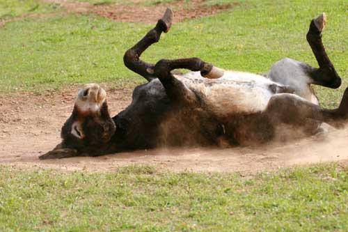 """Stručni skup """"Zaštita i očuvanje izvornih pasmina magaraca"""""""