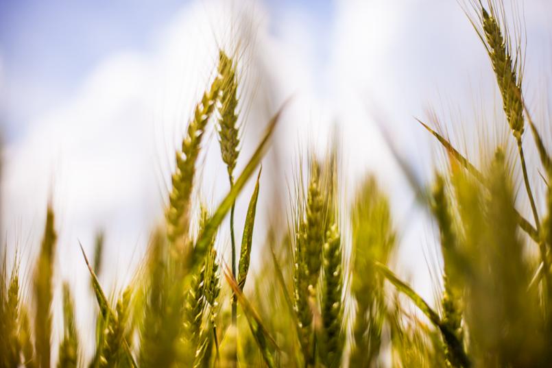 Obavijest o održavanju radionice za tip operacije 1.2.2. Potpora razvoju malih poljoprivrednih gospodarstava u okviru LAG natječaja - prva radionica - Nedešćina 5.4.2018.