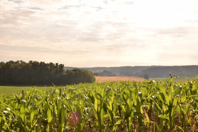 Objavljen Pravilnik o provedbi Programa potpora poljoprivredi na području Općine Pićan za 2018. godinu
