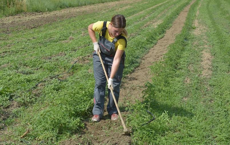 Pićan: U zakup maksimalno 20 hektara poljoprivrednog zemljišta u vlasništvu RH / Grad Labin davat će u zakup samo po 5 hektara