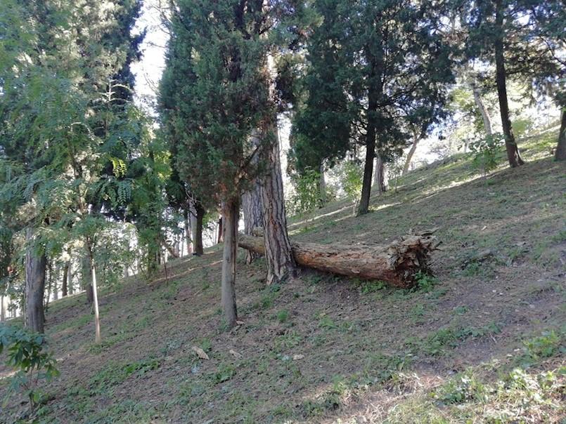 RASPRAVA O PARKU: Iz Pinete će se ukloniti 156 stabala