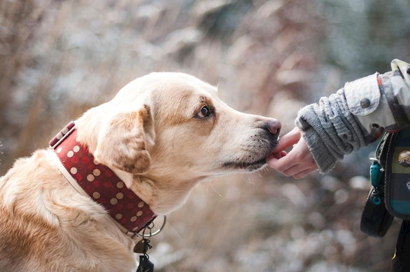 Obavijest vlasnicima pasa