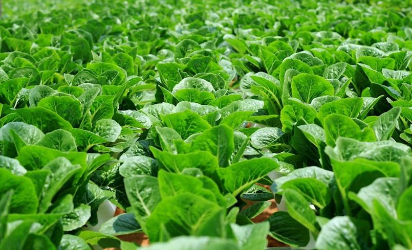[POZIV] Predavanje o ekološkoj poljoprivredi u Općini Kršan
