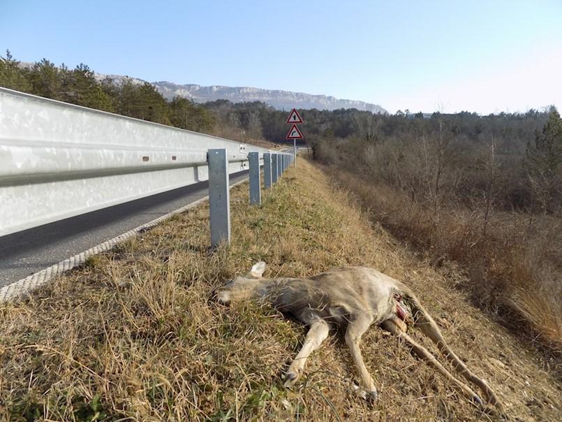 U UDRUGAMA LOVACA LAKŠE SE DIŠE Štete od divljači u prometu više neće plaćati lovačka društva