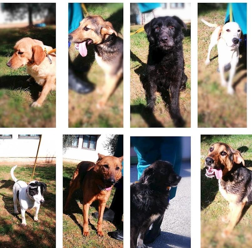 Udomite napuštene pse s područja Grada Labina zbrinute u azilu u Poreču