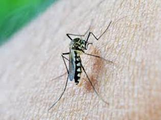 [OBAVIJEST] Na području Općine Kršan suzbijanje komaraca zamagljivanjem 19. i 20. lipnja