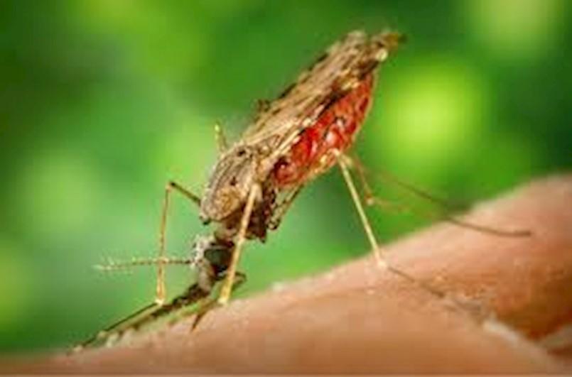 Na području Općine Raša 1. i 2. srpnja zamagljivanje protiv komaraca