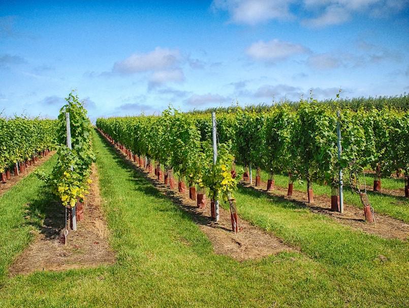 Obavijest vinogradarima