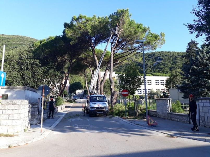 Zbog sigurnosti prolaznika uklanjaju se borovi kraj škole u Raši