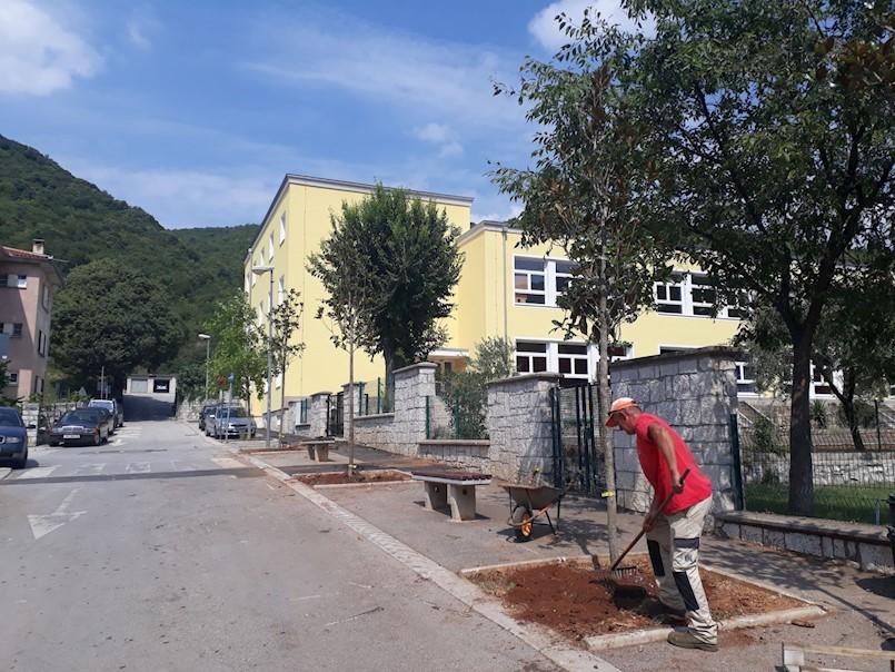 Zasađene magnolije ispred škole i vrtića u Raši