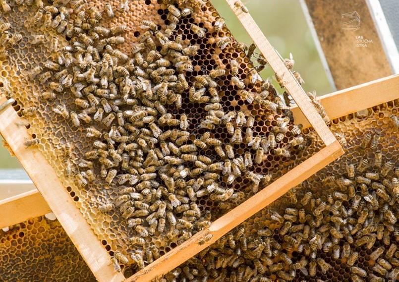 [POZIV] Sajam pčelinjih proizvoda, međunarodni cooking show na bazi meda i otvorenje gradskog pčelinjaka