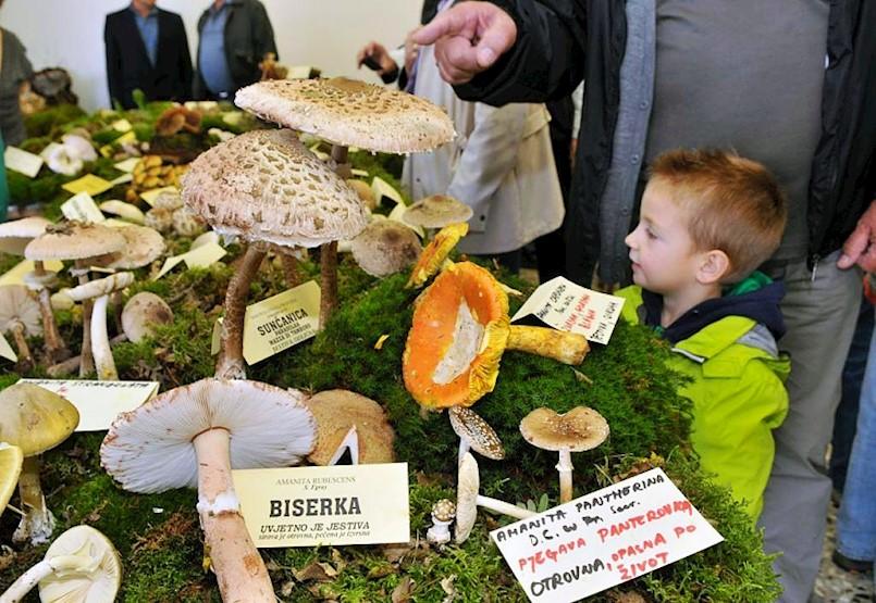 U subotu godišnja izložba gljiva u školi na Katurama