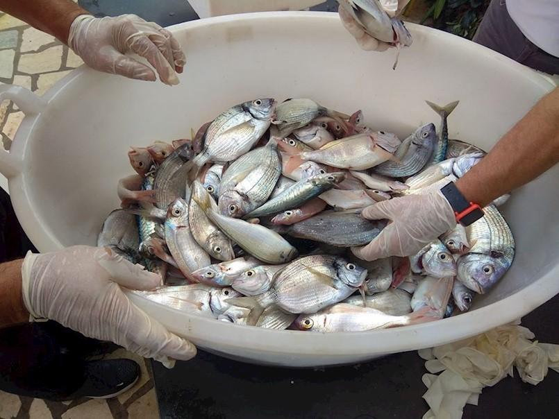 Priznanja najuspješnijim sportskim ribolovcima