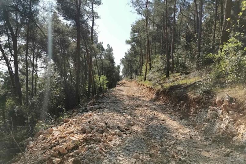 NAVODNA DEVASTACIJA ŠUMA NA LABINŠTINI? Hrvatske šume: Siječemo prema godišnjem planu, a svi su podaci javni i transparenti