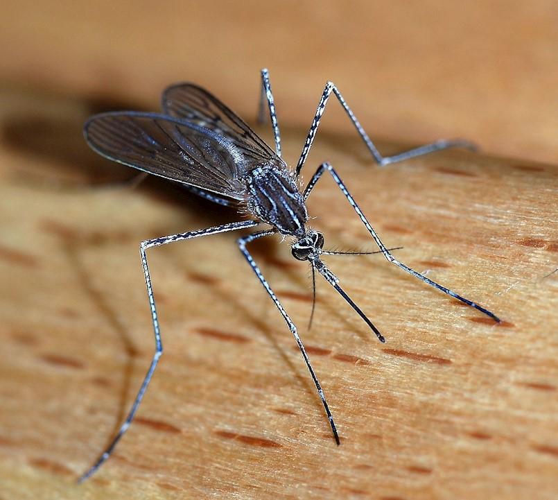 Obavijest o dezinsekciji komaraca na području Općine Kršan