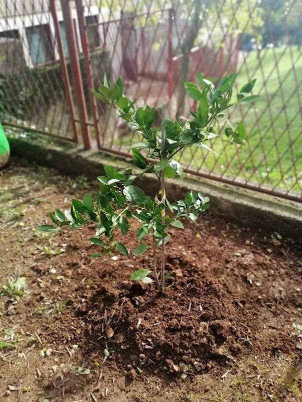 """LAG Istočna Istra u sklopu projekta """"Domaće od malih nogu"""" započeo sa sadnjom voćaka u dječjim vrtićima Labinštine"""