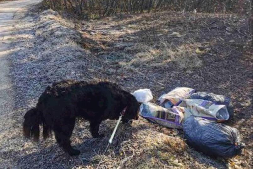 Općina Sveta Nedelja: BIJESNI GRAĐANI TRAŽE HITNO SANKCIONIRANJE ŠPORKULJA: Mještani očistili šumu, no ubrzo su nesavjesni pojedinci iskrcali novo smeće, među kojim je i KANCEROGENI AZBEST