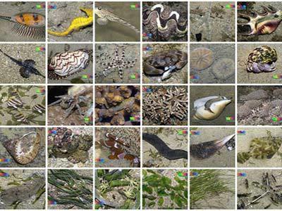 Dan biološke raznolikosti