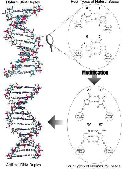 Umjetna DNK će pokretati kompjutere u budućnosti