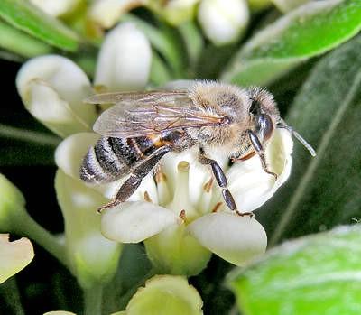 Što bi mogao značiti masovni pomor pčela?