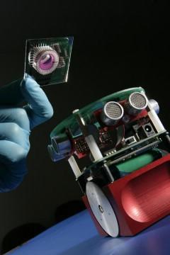Robot s biološkim mozgom