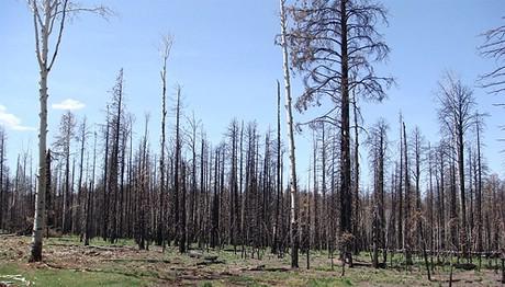 Propadanje prirode opasnije od pada na burzama