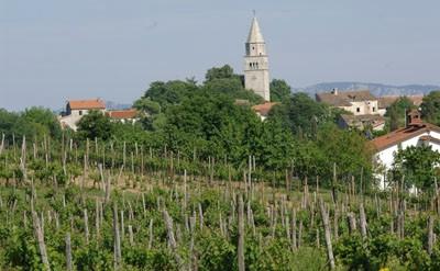 Gračišće: U tijeku su pripreme za 8. Smotru vina središnje Istre