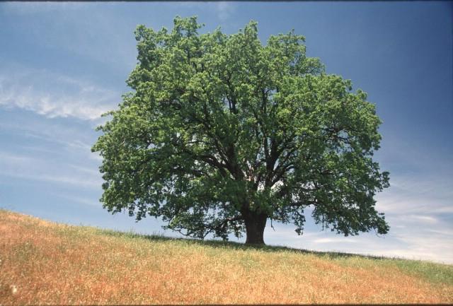 """U rabačkom vrtiću započinje akcija """"Usvoji drvo"""""""