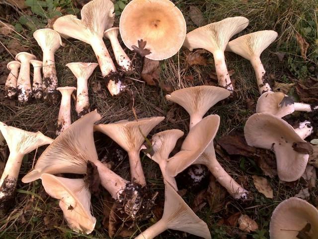 """Tečaj za sakupljače i prodavače gljiva u organizaciji Društva gljivara """"Martinčica"""""""
