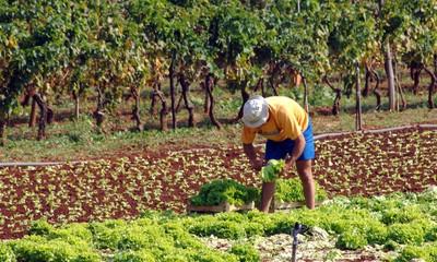 Obavijest: poljoprivrednici požurite - traženje poticaja do 15. svibnja