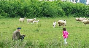 U krizi ni fakultetski obrazovani ne biraju/ Za mužnju krava u Kršanu plaća i u naturi