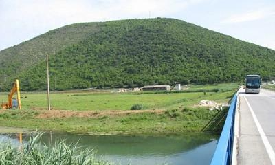 Most Raša: Psi lutalice zaklali sedam ovaca