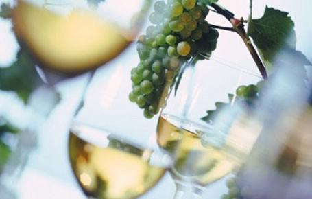 5. Smotra vina istočne Istre na Skitači