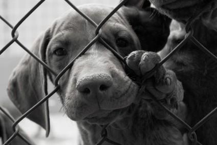 """Udruga """"Feniks"""" suočena s problemom zbrinjavanja napuštenih životinja"""