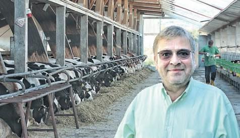 Bio Adria - najveća istarska farma krava: Mlijeko i meso iz Čepićkog polja