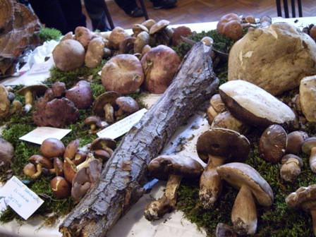 Na izložbi gljiva u Nedešćini izloženo 130 vrsta