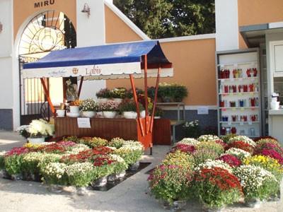 Prodaja cvijeća na grobljima Labinštine