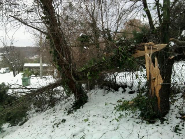 Na području Labinštine veći broj slomljenog drveća pod teretom snijega