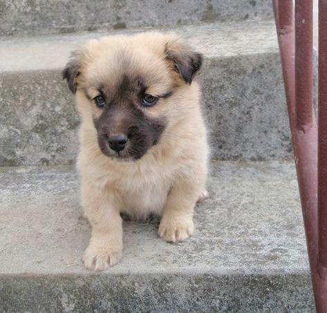Udruga za zaštitu životinja Fenix: Hitno se traže udomitelji ili vlasnici dvije kujice