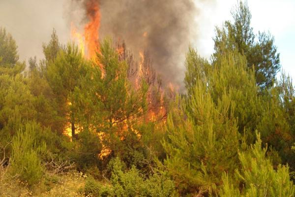Požar u blizini Zatke kod Čepića: gorjeli trava i nisko raslinje