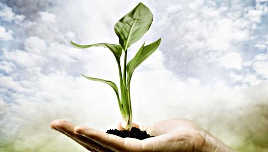 Grad Labin obilježava Dan planeta Zemlje besplatnom podjelom sadnica i eko letcima - 16. 4. Gradska tržnica i ispod Apola u Rapcu